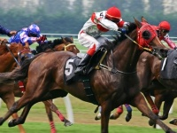 Horse Racing Betting Betting